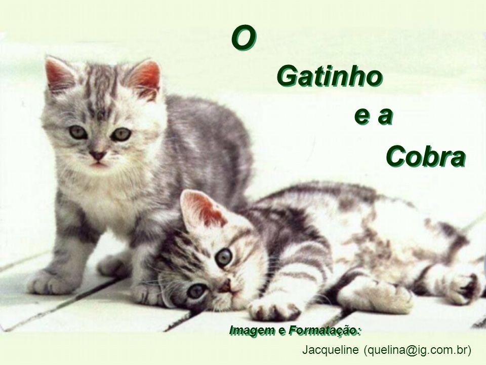Gatinho e a Cobra O O Imagem e Formatação: Jacqueline (quelina@ig.com.br)