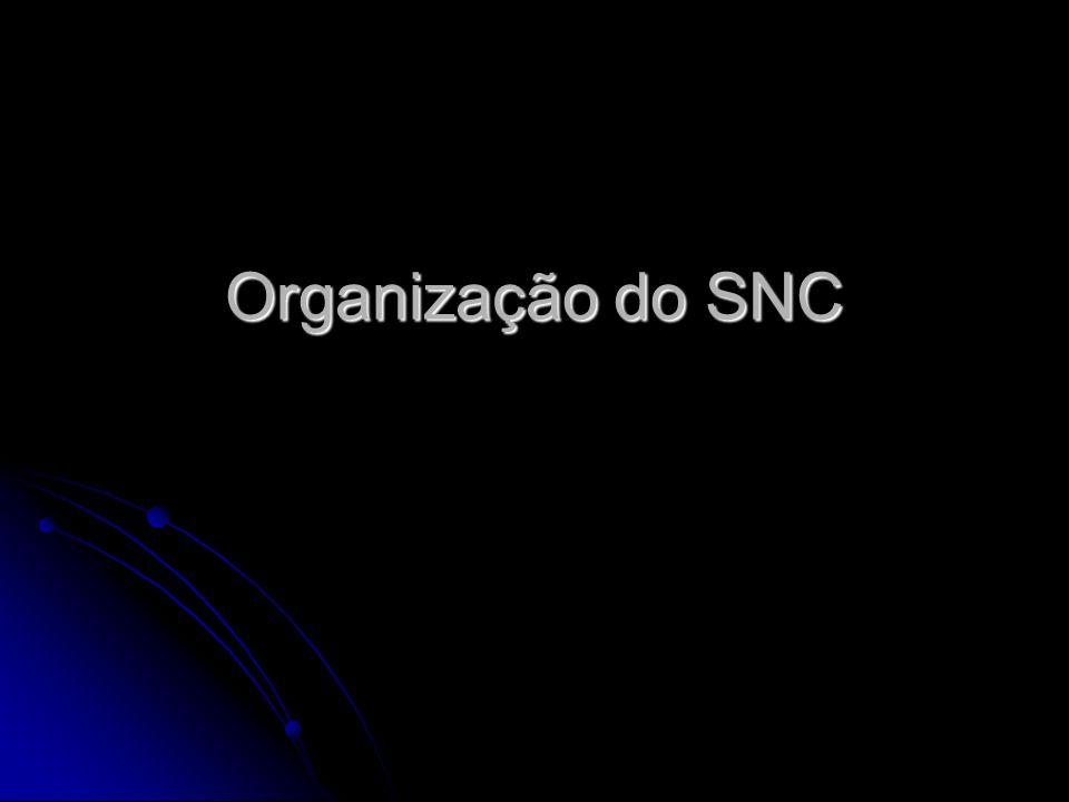 Organização do SNC Profª Diane Luce Bonito Profª Diane Luce Bonito