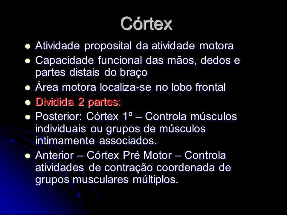 Córtex Atividade proposital da atividade motora Atividade proposital da atividade motora Capacidade funcional das mãos, dedos e partes distais do braç