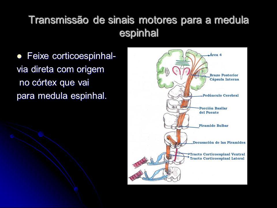 Transmissão de sinais motores para a medula espinhal Feixe corticoespinhal- Feixe corticoespinhal- via direta com origem no córtex que vai no córtex q