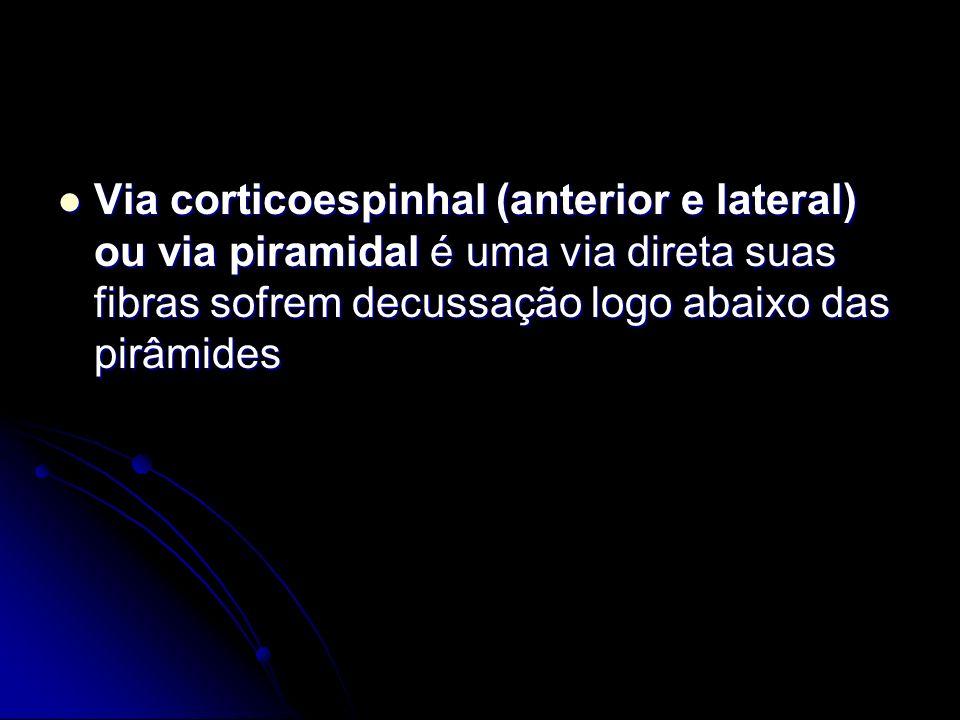 Via corticoespinhal (anterior e lateral) ou via piramidal é uma via direta suas fibras sofrem decussação logo abaixo das pirâmides Via corticoespinhal