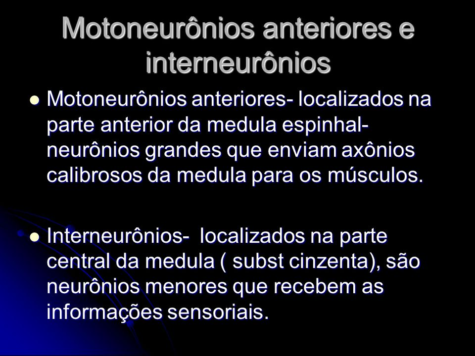 Motoneurônios anteriores e interneurônios Motoneurônios anteriores- localizados na parte anterior da medula espinhal- neurônios grandes que enviam axô