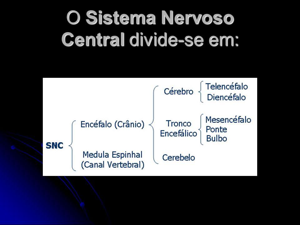 O Sistema Nervoso Central divide-se em: