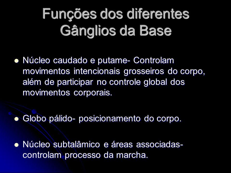 Funções dos diferentes Gânglios da Base Núcleo caudado e putame- Controlam movimentos intencionais grosseiros do corpo, além de participar no controle