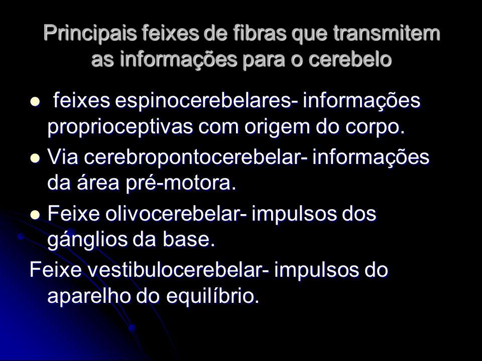 Principais feixes de fibras que transmitem as informações para o cerebelo feixes espinocerebelares- informações proprioceptivas com origem do corpo. f