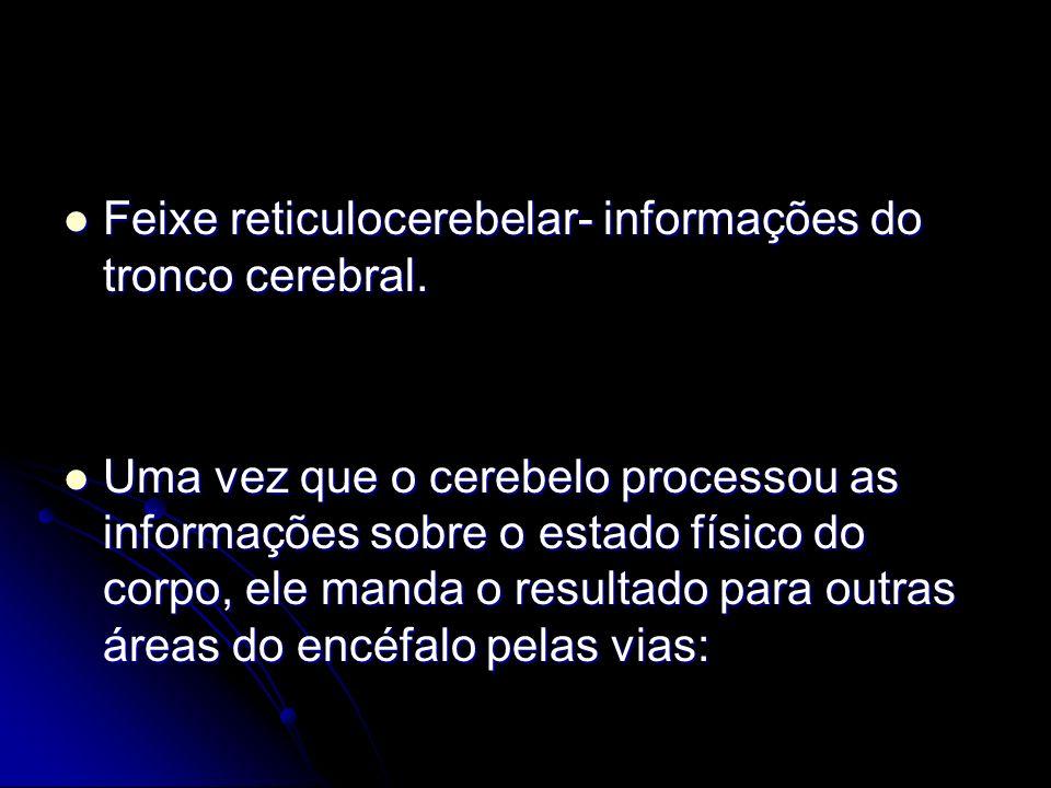Feixe reticulocerebelar- informações do tronco cerebral. Feixe reticulocerebelar- informações do tronco cerebral. Uma vez que o cerebelo processou as