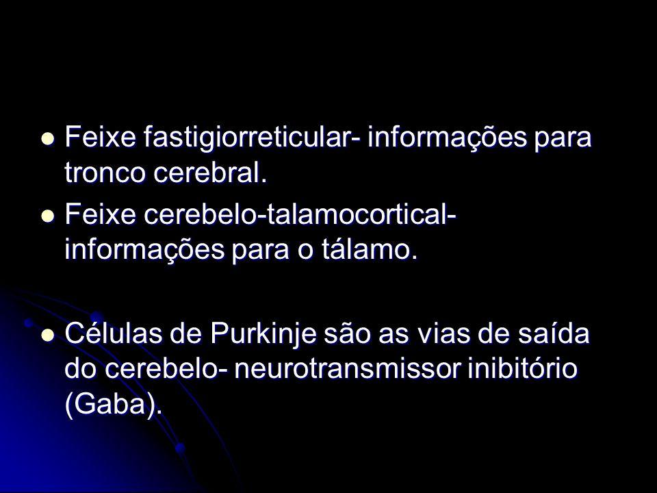 Feixe fastigiorreticular- informações para tronco cerebral. Feixe fastigiorreticular- informações para tronco cerebral. Feixe cerebelo-talamocortical-