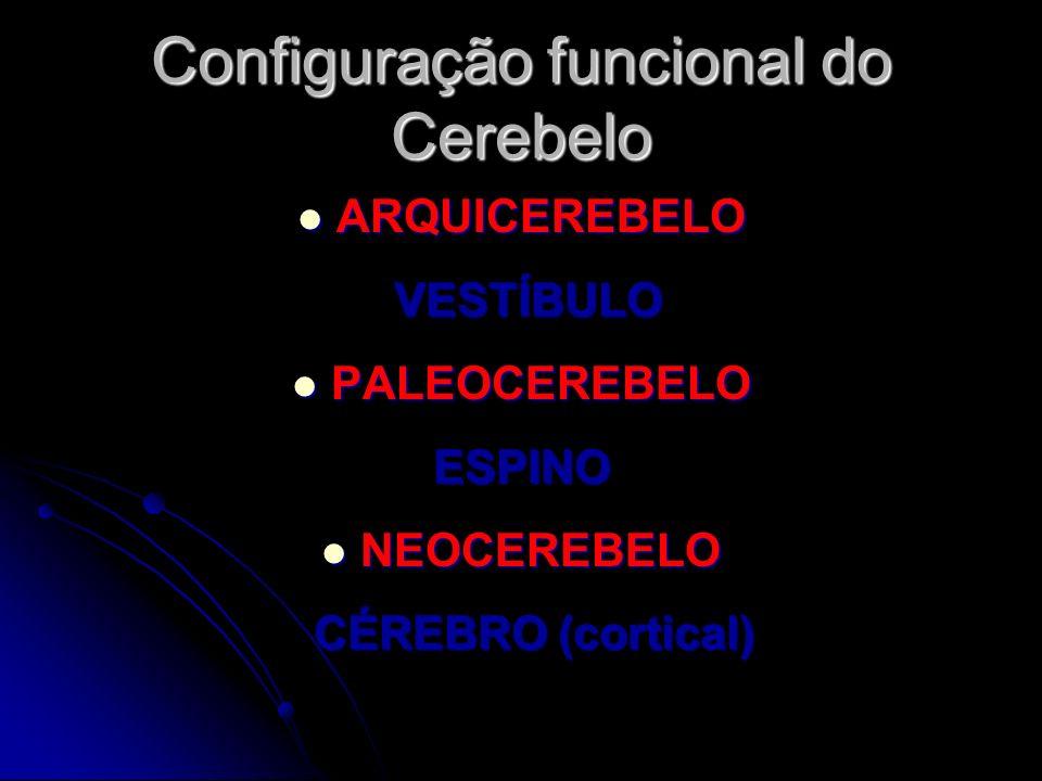 Configuração funcional do Cerebelo ARQUICEREBELO ARQUICEREBELO VESTÍBULO VESTÍBULO PALEOCEREBELO PALEOCEREBELOESPINO NEOCEREBELO NEOCEREBELO CÉREBRO (