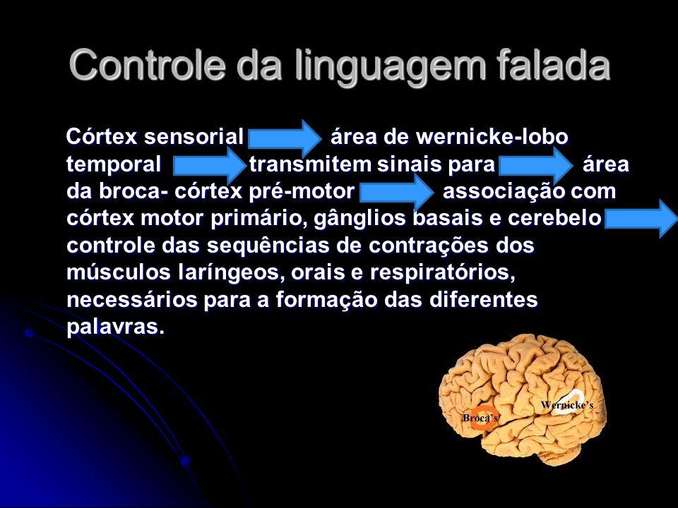 Controle da linguagem falada Córtex sensorial área de wernicke-lobo temporal transmitem sinais para área da broca- córtex pré-motor associação com cór