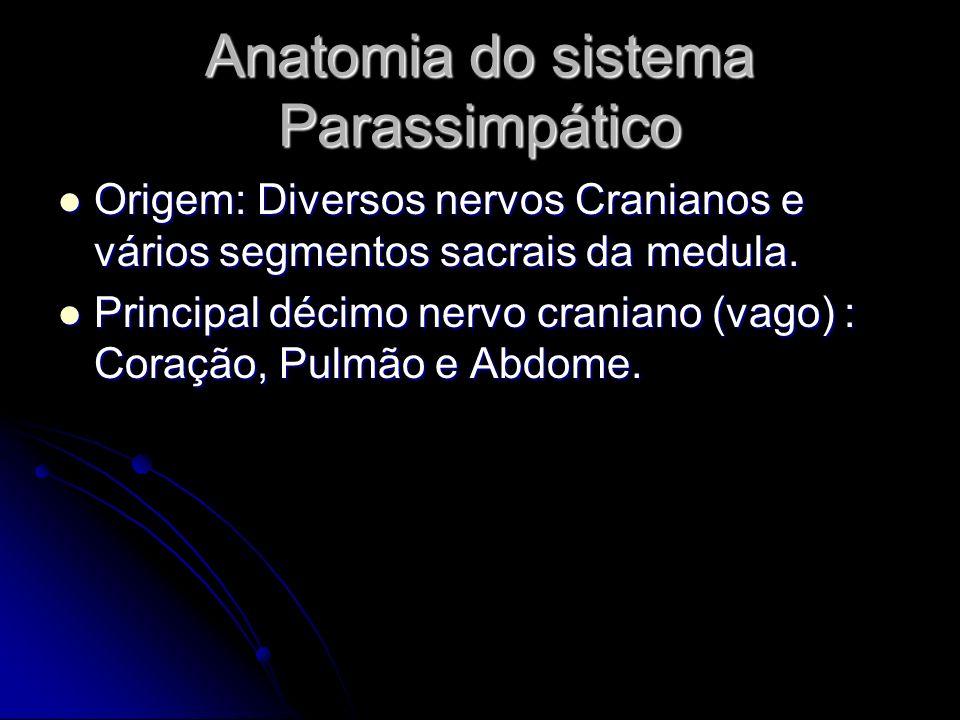 Anatomia do sistema Parassimpático Origem: Diversos nervos Cranianos e vários segmentos sacrais da medula. Origem: Diversos nervos Cranianos e vários