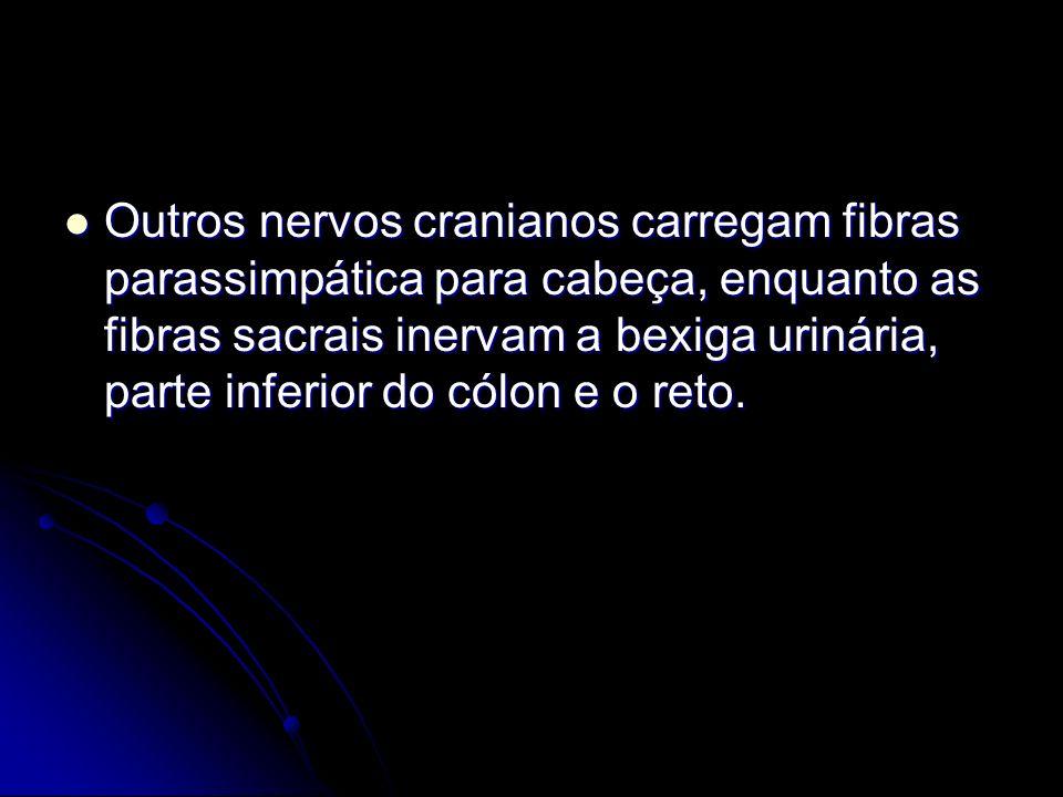 Outros nervos cranianos carregam fibras parassimpática para cabeça, enquanto as fibras sacrais inervam a bexiga urinária, parte inferior do cólon e o