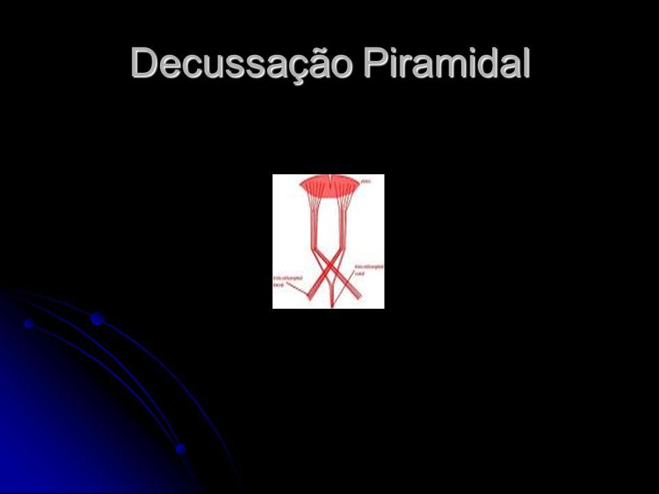 Decussação Piramidal