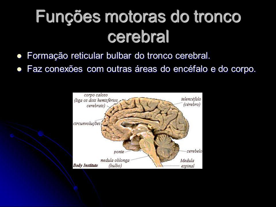 Funções motoras do tronco cerebral Formação reticular bulbar do tronco cerebral. Formação reticular bulbar do tronco cerebral. Faz conexões com outras