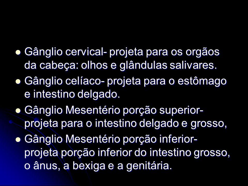 Gânglio cervical- projeta para os orgãos da cabeça: olhos e glândulas salivares. Gânglio cervical- projeta para os orgãos da cabeça: olhos e glândulas