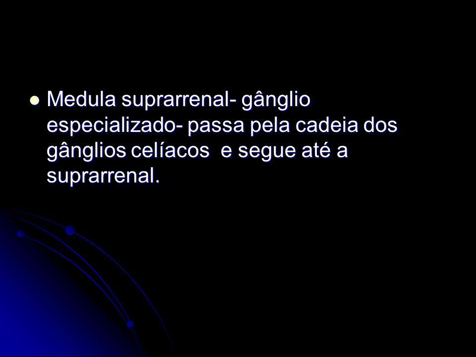 Medula suprarrenal- gânglio especializado- passa pela cadeia dos gânglios celíacos e segue até a suprarrenal. Medula suprarrenal- gânglio especializad