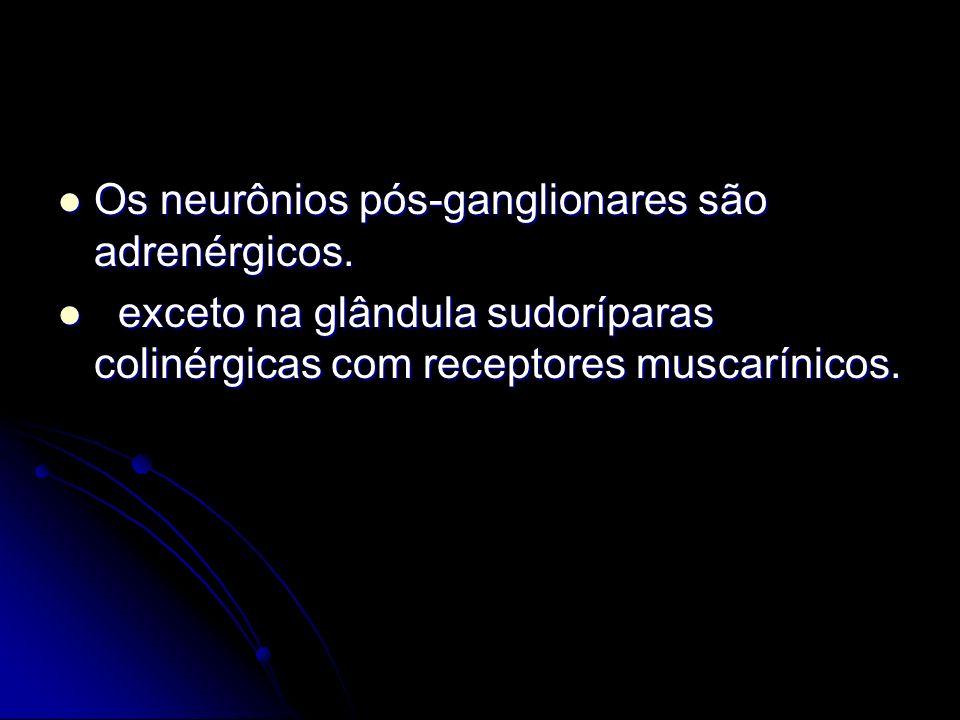 Os neurônios pós-ganglionares são adrenérgicos. Os neurônios pós-ganglionares são adrenérgicos. exceto na glândula sudoríparas colinérgicas com recept