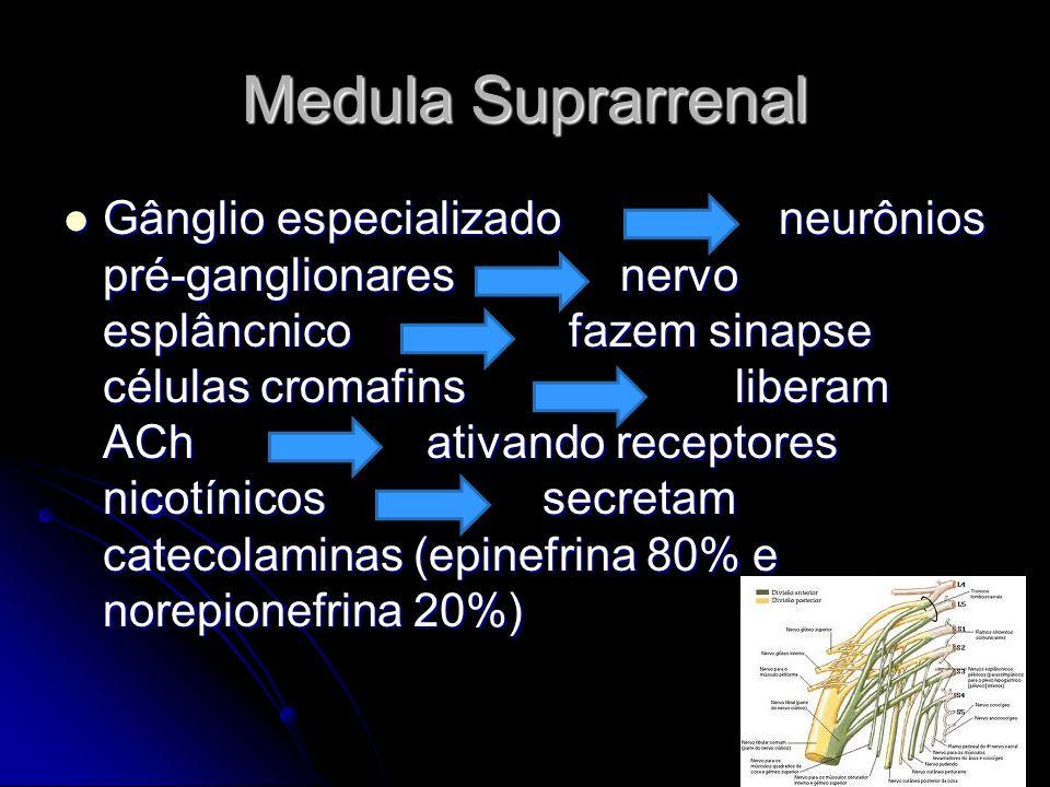Medula Suprarrenal Gânglio especializado neurônios pré-ganglionares nervo esplâncnico fazem sinapse células cromafins liberam ACh ativando receptores