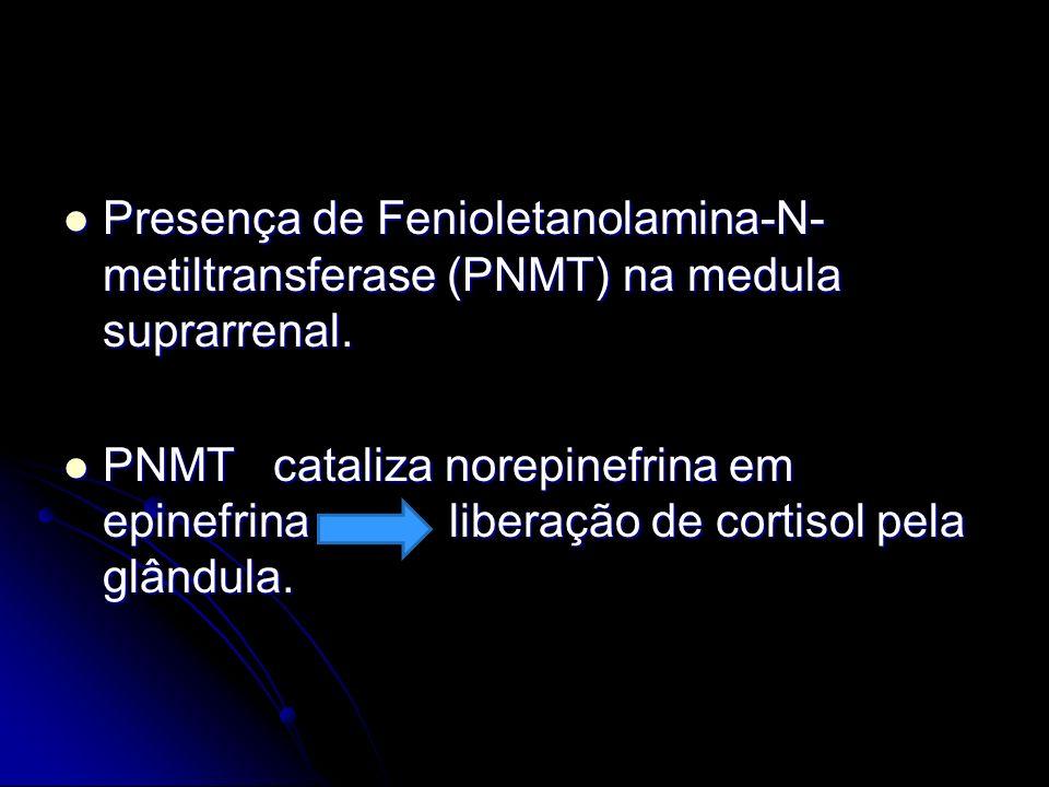 Presença de Fenioletanolamina-N- metiltransferase (PNMT) na medula suprarrenal. Presença de Fenioletanolamina-N- metiltransferase (PNMT) na medula sup