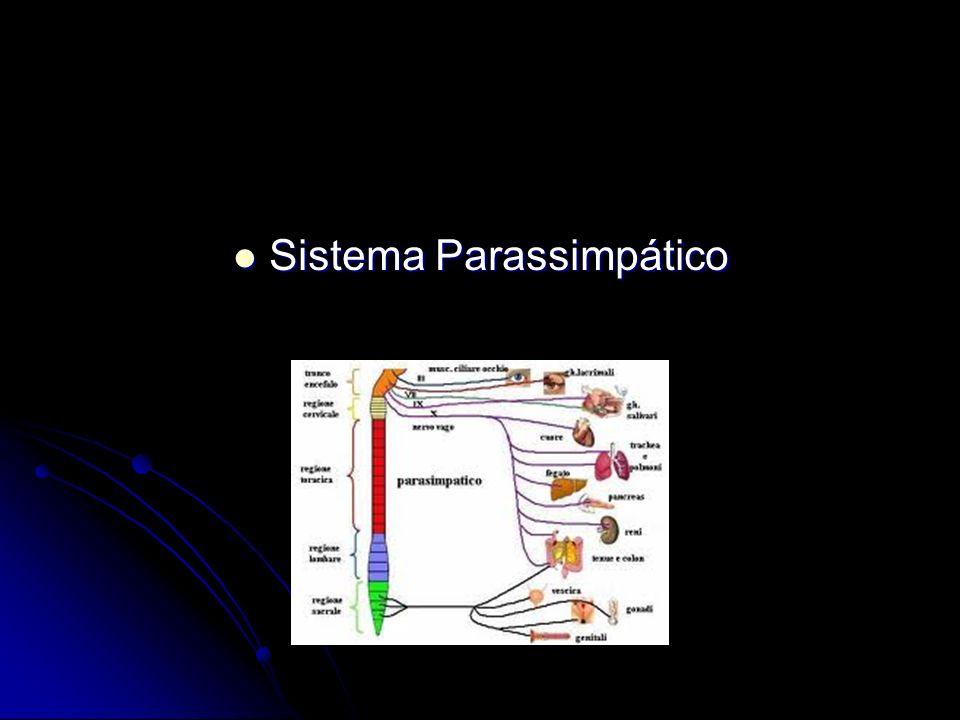 Sistema Parassimpático Sistema Parassimpático