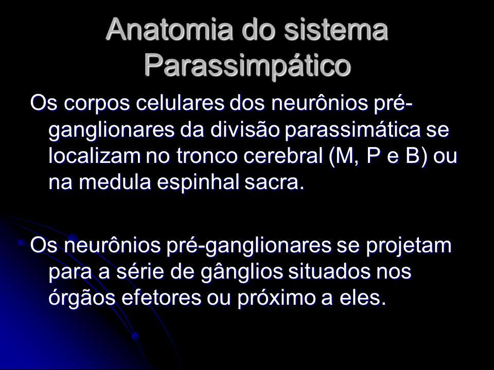 Anatomia do sistema Parassimpático Os corpos celulares dos neurônios pré- ganglionares da divisão parassimática se localizam no tronco cerebral (M, P