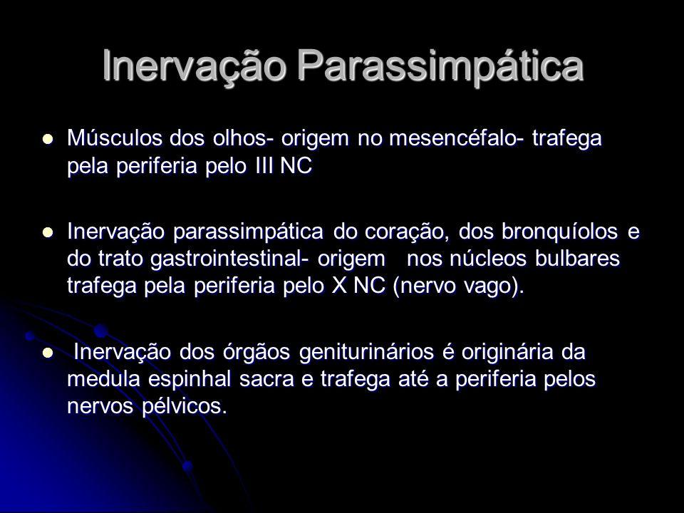 Inervação Parassimpática Músculos dos olhos- origem no mesencéfalo- trafega pela periferia pelo III NC Músculos dos olhos- origem no mesencéfalo- traf