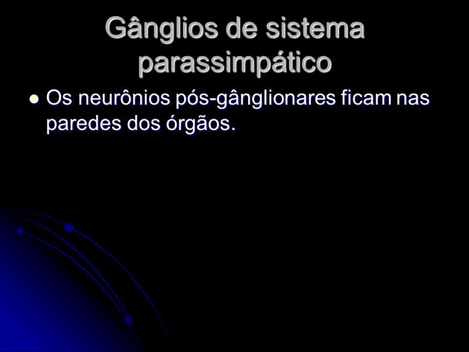 Gânglios de sistema parassimpático Os neurônios pós-gânglionares ficam nas paredes dos órgãos. Os neurônios pós-gânglionares ficam nas paredes dos órg
