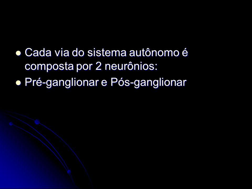 Cada via do sistema autônomo é composta por 2 neurônios: Cada via do sistema autônomo é composta por 2 neurônios: Pré-ganglionar e Pós-ganglionar Pré-