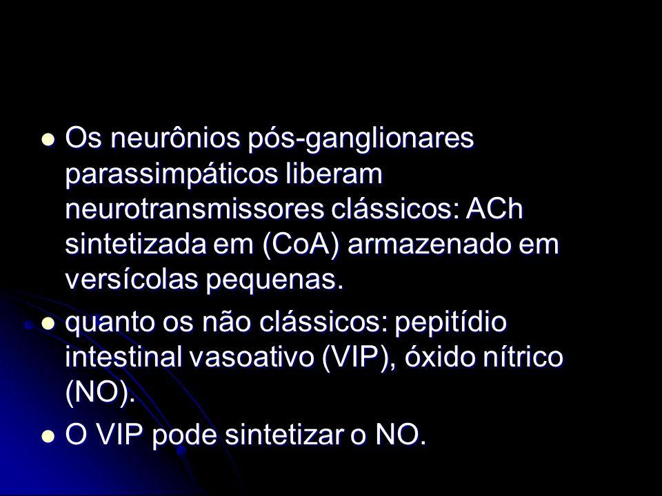 Os neurônios pós-ganglionares parassimpáticos liberam neurotransmissores clássicos: ACh sintetizada em (CoA) armazenado em versícolas pequenas. Os neu