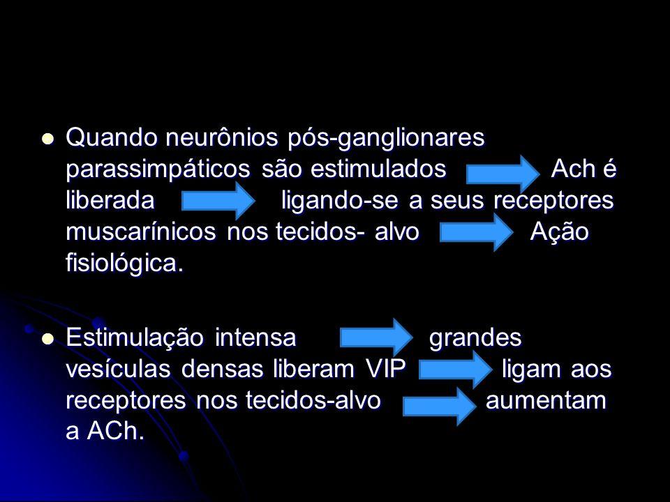 Quando neurônios pós-ganglionares parassimpáticos são estimulados Ach é liberada ligando-se a seus receptores muscarínicos nos tecidos- alvo Ação fisi