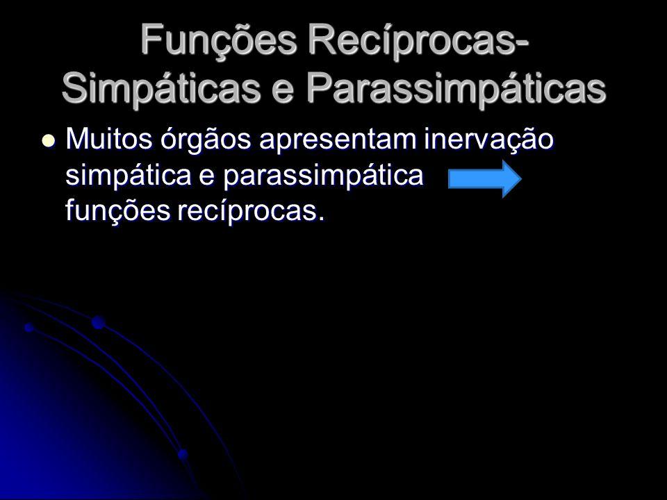 Funções Recíprocas- Simpáticas e Parassimpáticas Muitos órgãos apresentam inervação simpática e parassimpática funções recíprocas. Muitos órgãos apres