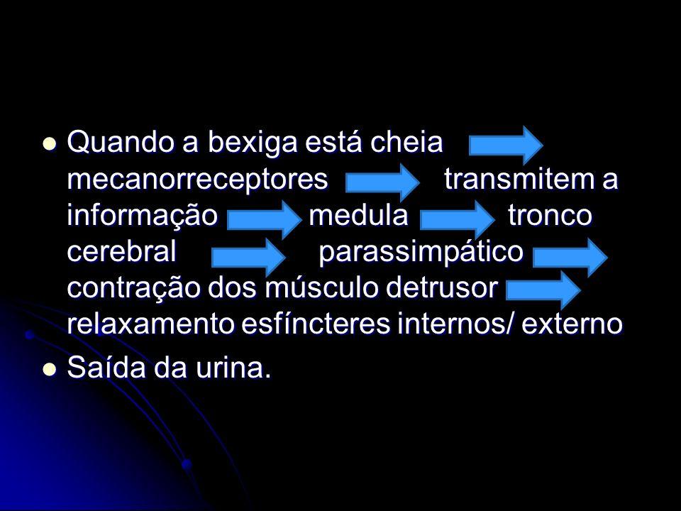 Quando a bexiga está cheia mecanorreceptores transmitem a informação medula tronco cerebral parassimpático contração dos músculo detrusor relaxamento