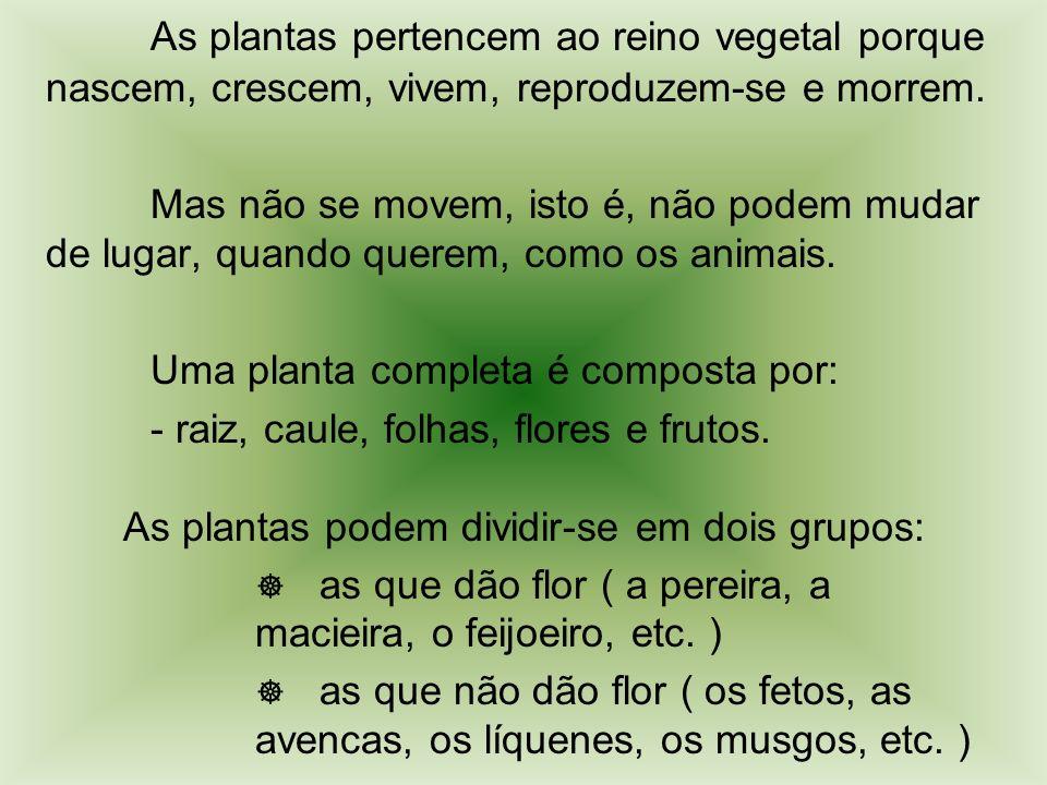 As plantas pertencem ao reino vegetal porque nascem, crescem, vivem, reproduzem-se e morrem.