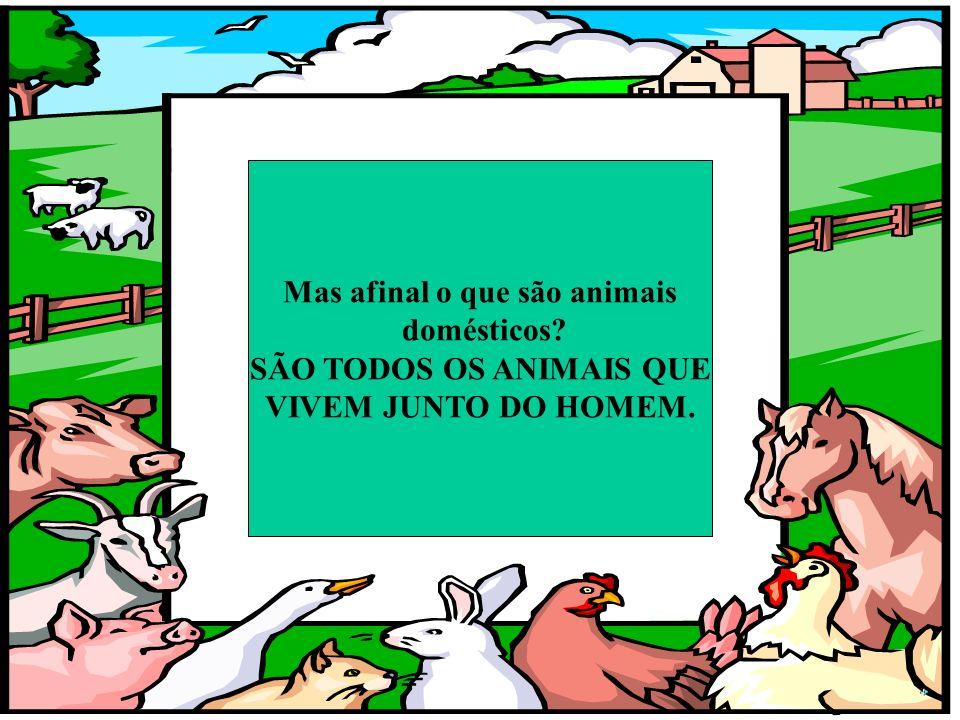 Quais achas que são os animais domésticos? Eu sou da quinta Sou um animal selvagem Eu sou da quinta