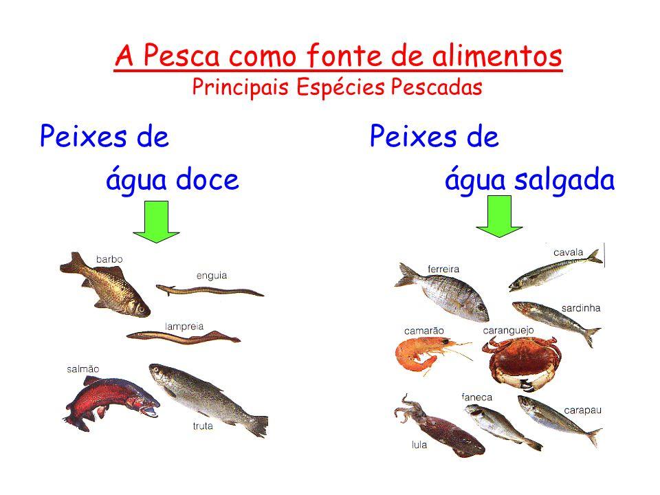 A Pesca como fonte de alimentos Principais Espécies Pescadas Peixes de água doce água salgada