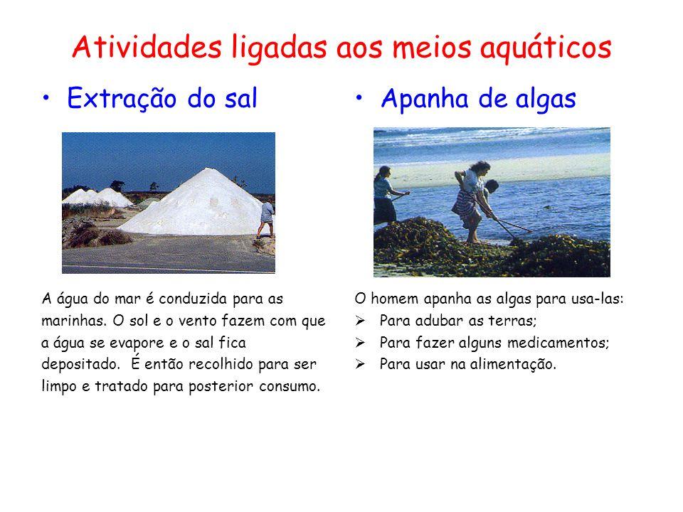 Atividades ligadas aos meios aquáticos Extração do sal A água do mar é conduzida para as marinhas.