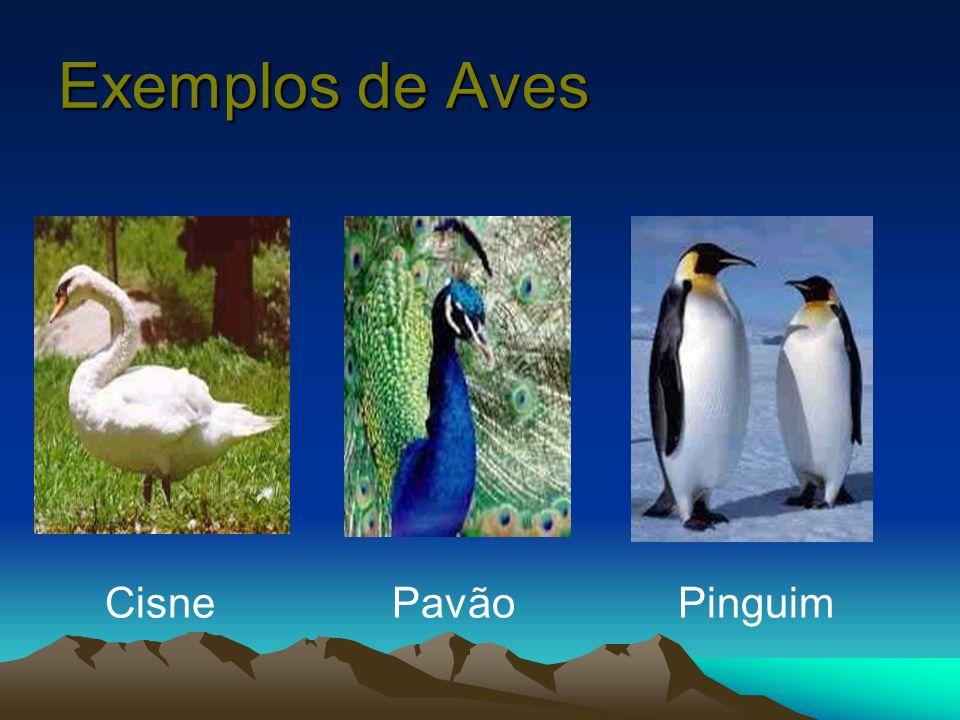 Exemplos de Aves Cisne Pavão Pinguim