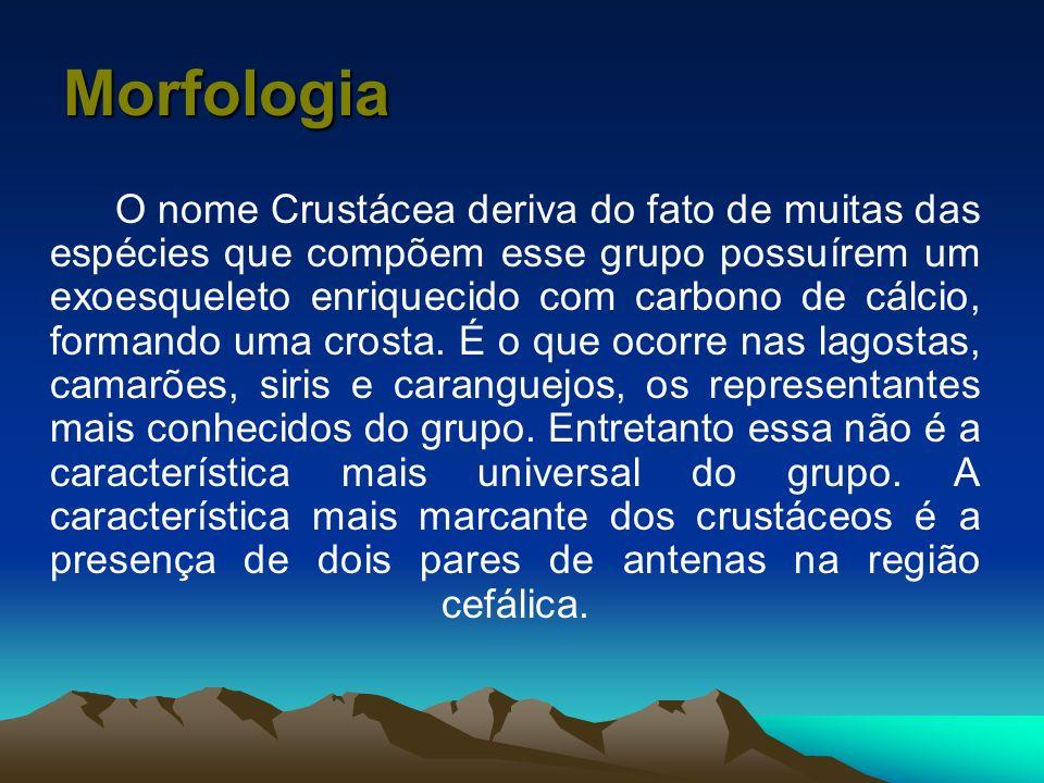 Morfologia O nome Crustácea deriva do fato de muitas das espécies que compõem esse grupo possuírem um exoesqueleto enriquecido com carbono de cálcio,