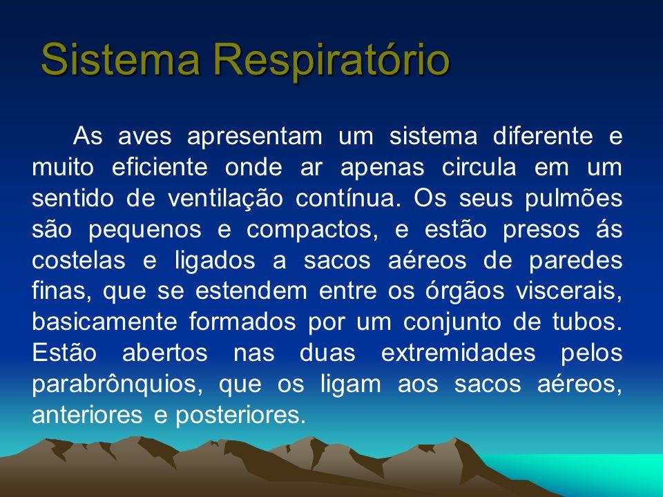 Sistema Respiratório As aves apresentam um sistema diferente e muito eficiente onde ar apenas circula em um sentido de ventilação contínua. Os seus pu