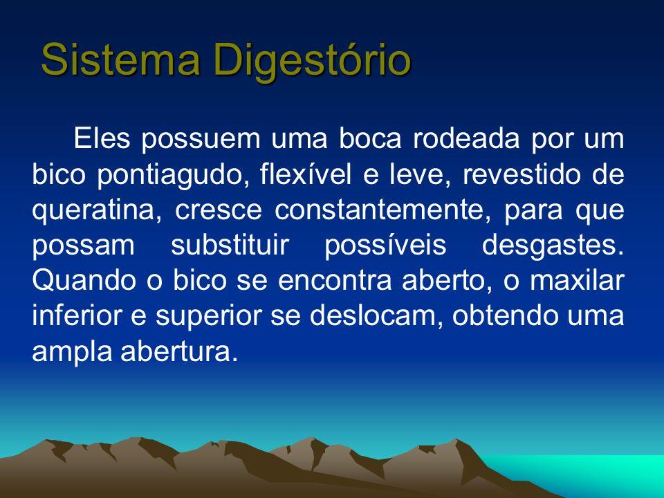 Sistema Digestório Eles possuem uma boca rodeada por um bico pontiagudo, flexível e leve, revestido de queratina, cresce constantemente, para que poss