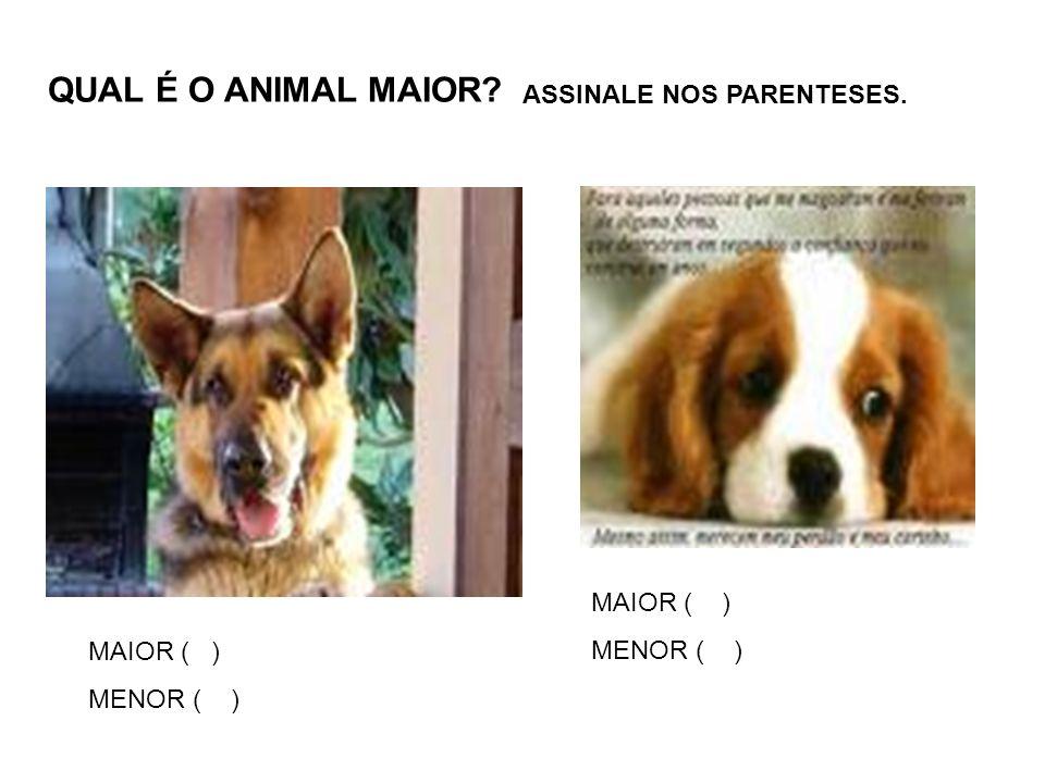 QUAL É O ANIMAL MAIOR? MAIOR ( ) MENOR ( ) ASSINALE NOS PARENTESES. MAIOR ( ) MENOR ( )