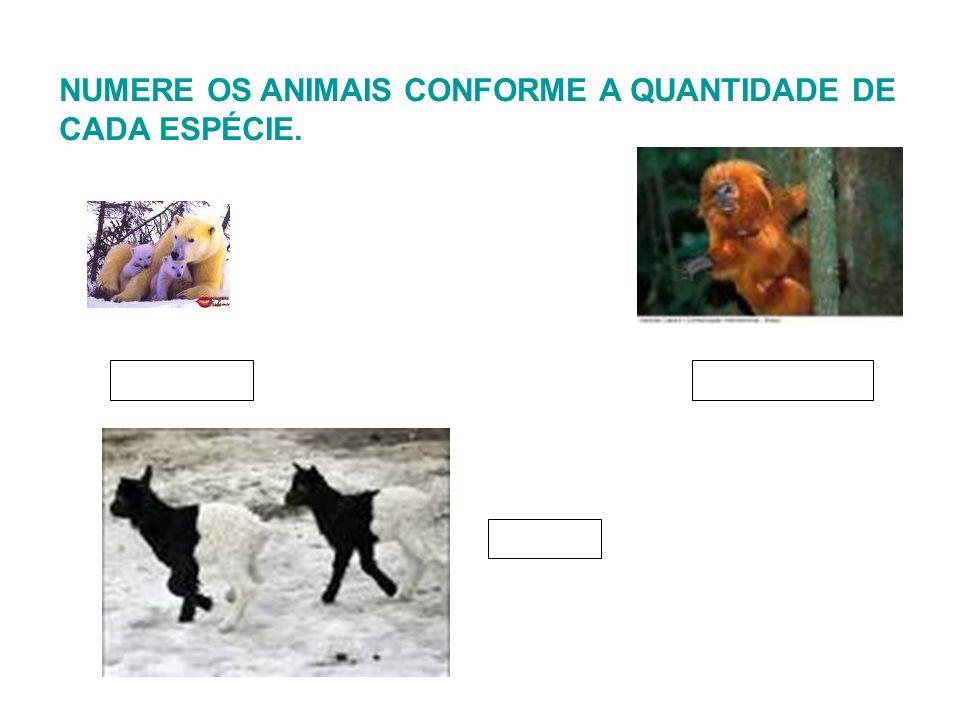 NUMERE OS ANIMAIS CONFORME A QUANTIDADE DE CADA ESPÉCIE.