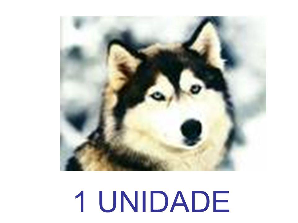 1 UNIDADE