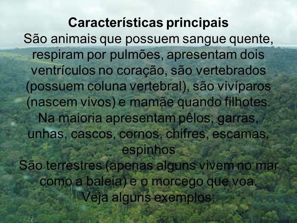 Características principais São animais que possuem sangue quente, respiram por pulmões, apresentam dois ventrículos no coração, são vertebrados (possu