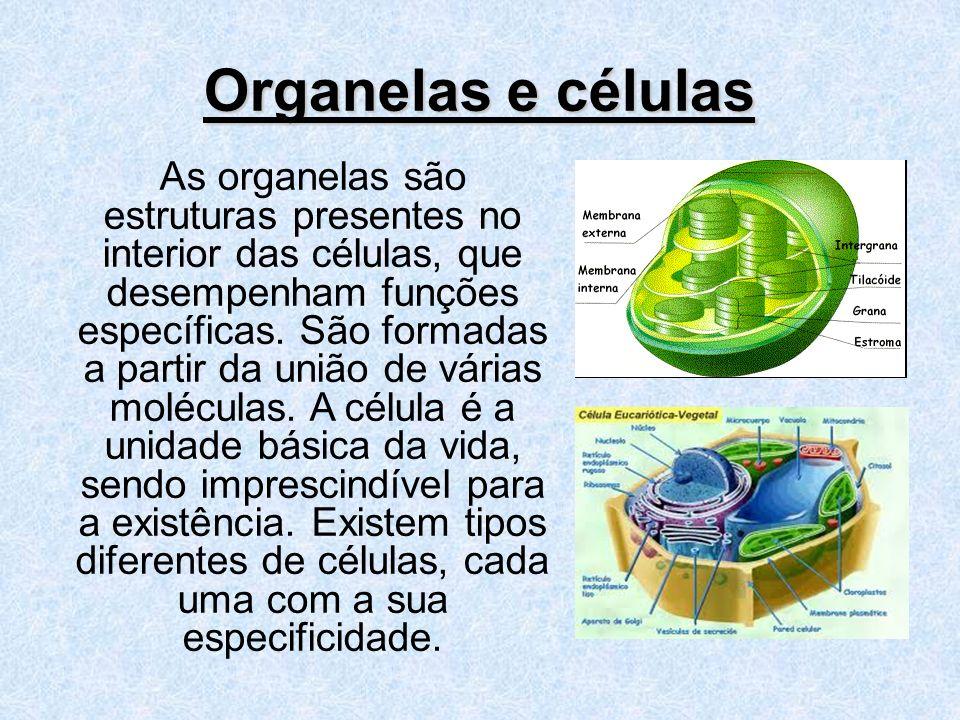 Organelas e células As organelas são estruturas presentes no interior das células, que desempenham funções específicas. São formadas a partir da união