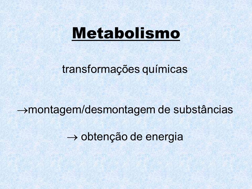 Metabolismo transformações químicas montagem/desmontagem de substâncias obtenção de energia