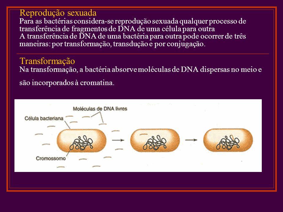 Reprodução sexuada Para as bactérias considera-se reprodução sexuada qualquer processo de transferência de fragmentos de DNA de uma célula para outra