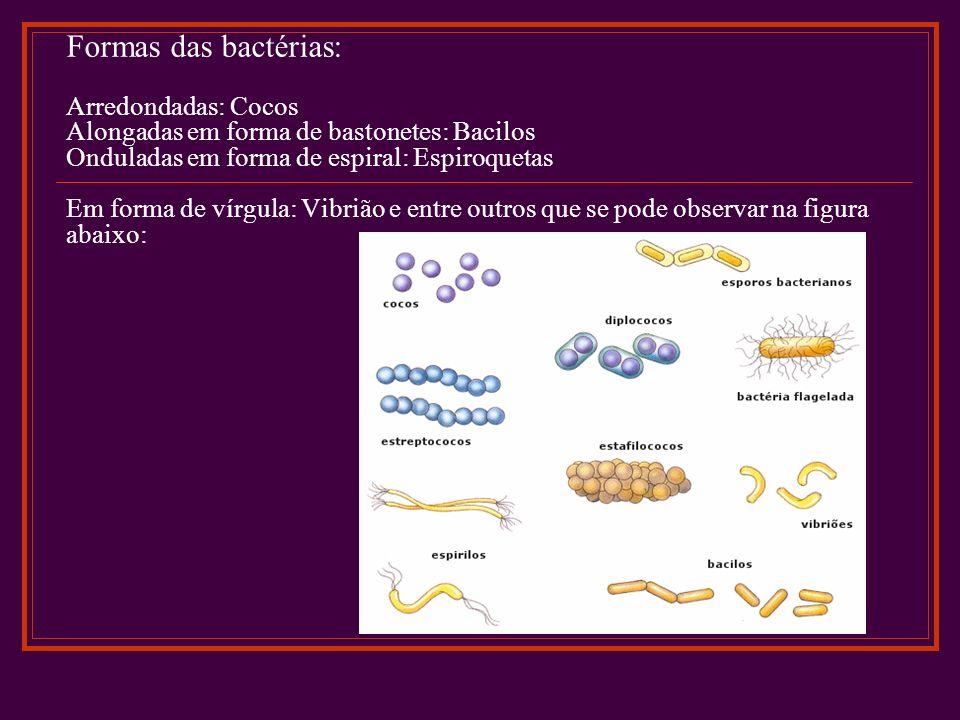 Formas das bactérias: Arredondadas: Cocos Alongadas em forma de bastonetes: Bacilos Onduladas em forma de espiral: Espiroquetas Em forma de vírgula: V