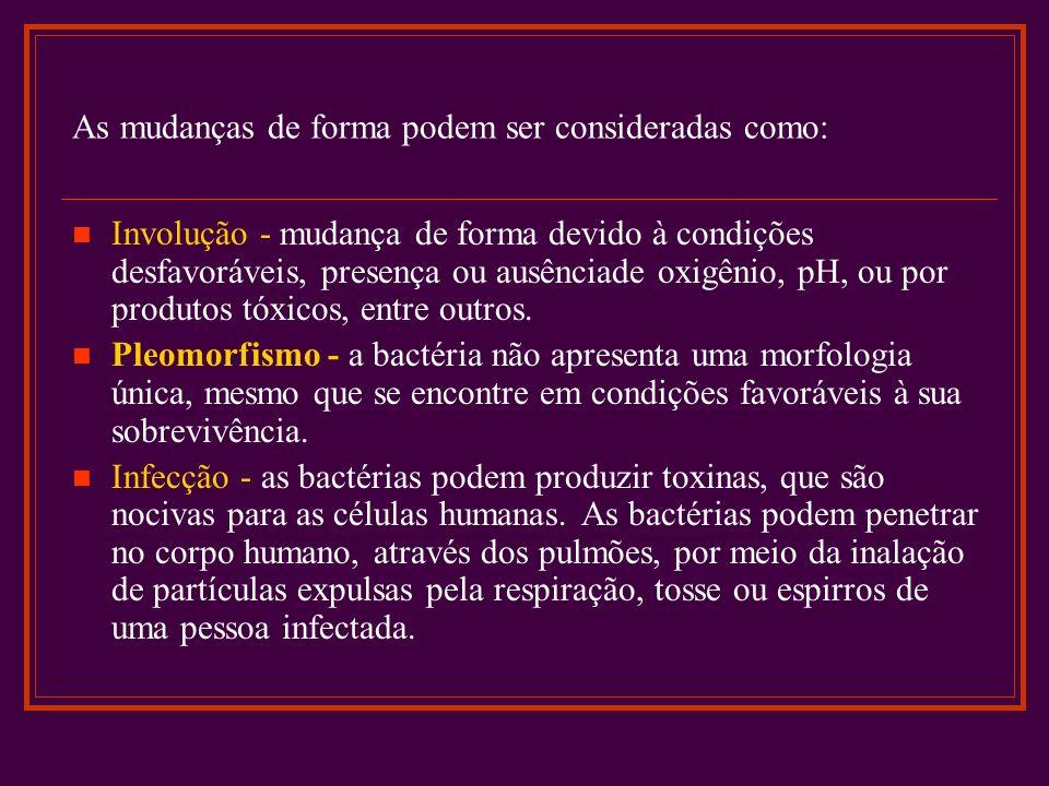 Classificação Corante de Gram: Christian Gram, desenvolveu o procedimento em 1884, a coloração de Gram classifica as bactérias em Gram-positivas ou Gram-negativas São exemplos de bactérias Gram-positivas várias espécies de: Estreptococos; - Estafilococos; - Enterococos.