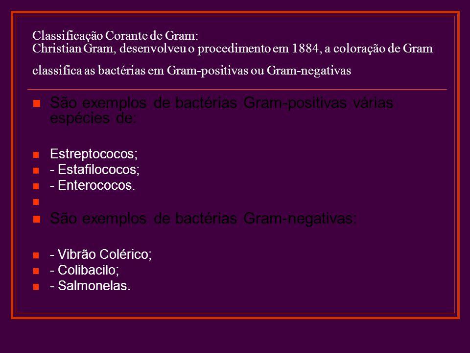 Classificação Corante de Gram: Christian Gram, desenvolveu o procedimento em 1884, a coloração de Gram classifica as bactérias em Gram-positivas ou Gr