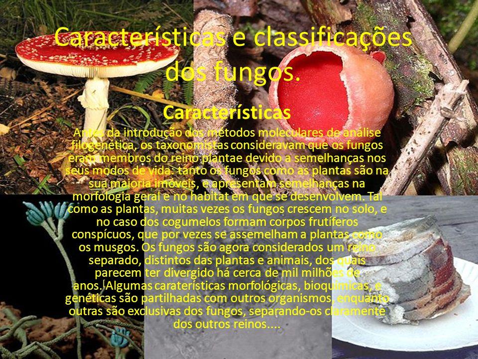 Características e classificações dos fungos. Características Antes da introdução dos métodos moleculares de análise filogenética, os taxonomistas cons